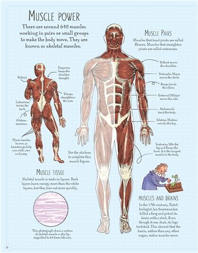 Usborne See Inside: Human body sticker book